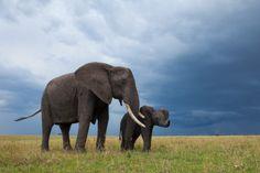 Mark Dumbleton / Masai Mara, Kenya