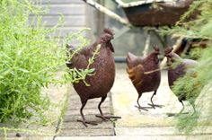 Rusty Hens on patrol