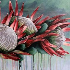 Protea Art, Protea Flower, Cactus E Suculentas, Gouache Painting, Art Pictures, Art Inspo, Flower Art, Pop Art, Illustration Art