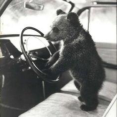 1960'lı yıllardan alışılmışın dışında hayvan fotoğrafları ajanimo.com'da.. #ajanimo #ajanbrian