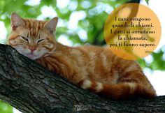 Il 17 febbraio si celebra la Festa nazionale del #gatto. Ecco la nostra raccolta di frasi sui gatti. Vi siete mai resi conto della differenza tra avere un cane o un gatto in casa? I primi sono affettuosi e obbedienti, i secondi affettuosi (quando ne hanno voglia).
