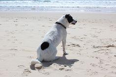 Hond, Strand, Zon, Huisdier, Zee, Vakantie, Dierlijke