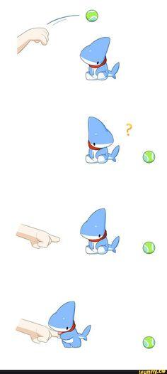 cute pet shark - Pesquisa Google