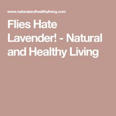 Flies Hate Lavender! - Natural and Healthy Living
