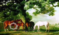 Green Pastures Wall Mural by York HJ6720M