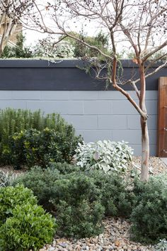 Seek this significant graphics in order to find out today facts and techniques on Waterwise Landscaping Australian Garden Design, Australian Native Garden, Bush Garden, Dry Garden, Amazing Gardens, Beautiful Gardens, Coastal Gardens, Porche, Landscaping Plants