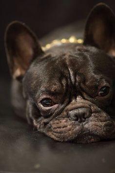 'Princess in Pearls', French Bulldog