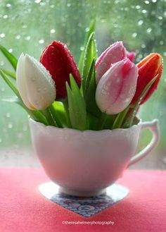 Tulips in a Teacup ♥♥ ~ Theresa Helmer Photography