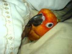 Birds for Adoption, Sale, Lost and Found, All Ages - PetFinder.my