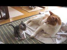 Очень забавный смешной маленький котенок.