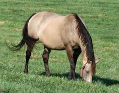 NSC for All Seasons: Carbohydrate Levels in Horse Pastures