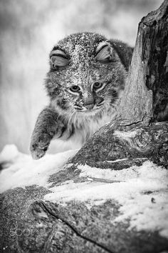 Typical Cat by Holly Kuchera on 500px