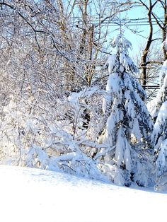 'Snow Covered trees in the woods photographic image for decorating, phone cases, tablet covers, tote bags' iPhone Wallet by grammy Snow Covered Trees, Tablet Cover, Iphone Wallet, Sell Your Art, Den, Family Room, Trips, Photographs, Traveling