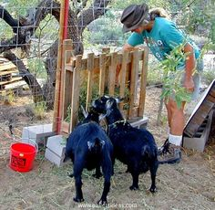 If you are planning the hay feeder only for a couple of goats that you have got in your pet collection, you can keep the hay feeder pretty low to the ground and keep it as simple as this one.