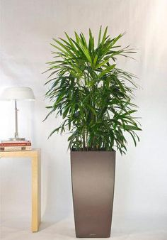 Your Online Indoor Plants Nursery and Pots Store. The most convenient way to buy House Plants and Office Plants In Houston. Container Plants, Container Gardening, Indoor Gardening, Kentia Palm, Organic Gardening Magazine, Starting A Vegetable Garden, Gardening Zones, Gardening Tips, Office Plants