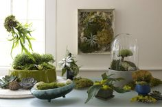 A Winter Project- Creating A Moss Garden. capturing a little of summer for those long miserable winter days