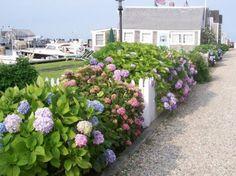 Harbor cottages in bloom