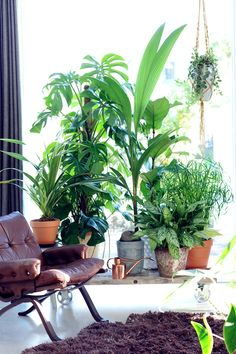 Grouping Plants | Feng Shui Interior Design | The Tao of Dana