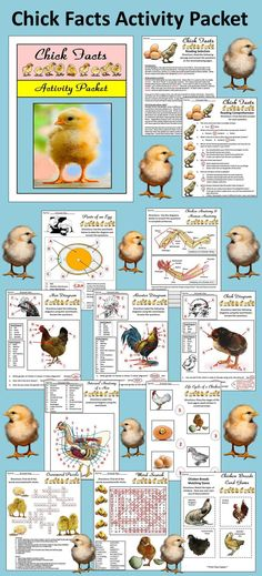 Chick Facts Activity Packet: This packet details the biology and physiology of the chicken. Packet provided in color and B/W.  Contents include: * 10 Page Reading Selection * 62 Reading Comprehension Questions * Two Writing Activities * Rooster, Hen, Chick, Egg, & Internal Anatomy Diagram * Chicken Wing Vs Human Arm Worksheet * Life Cycle Worksheet * Word Search * Crossword Puzzle * Chicken Breeds Matching Game * Answer Keys