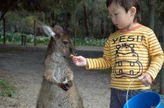 Margaret River Region, #Australia: Feeding the Kangaroo http://www.tripadvisor.com.au/ShowForum-g255101-i530-Western_Australia.html