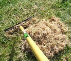 If You Southern Gardeners Are Seeing Dead Patches Of Lawn