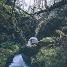 Outdoor — tentree:   Camping in the heart of the forest. |...