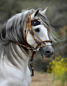 Beautiful horse, but that bridle sure looks uncomfortable.