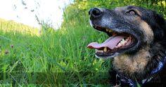 Hundetuch mit Reflektorstreifen in blau-weiß. Reflektierendes Tuch für mittelgroße Hunde.