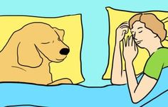 7 Surprising Reasons Your Dog Should Sleep On Your Bed Every Night
