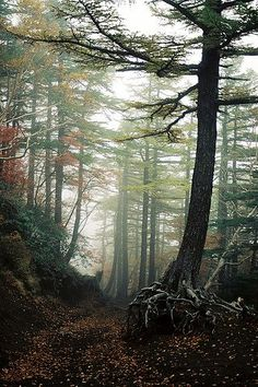 Japan's Aokigahara Forest is the real life inspiration for new horror The Forest