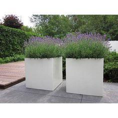 Buxus Polyester Plantenbak - Compleetgroen