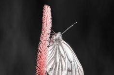Macro Photo of White Butterfly Standing on a Flower Macro Photo, Photo Boards, White Butterfly, Landscape Photographers, Some Pictures, Great Photos, Amazing Photography, Flower, Dark