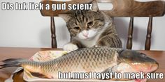 GMO salmon means more noms faster Picture Captions, Softies, Animal Pictures, Salmon, Kawaii, Science, Fish, Cats, Animals