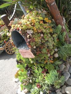 I love this mail box covered in succulents! #gardenchat