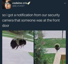 The bees trying to break in