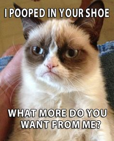 grumpy cat quotes | ... people bad tattoos funny sayings angry cat mean cat cute kittens