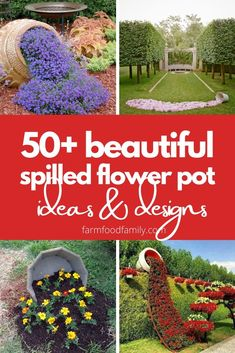 Checkout these amazing DIY spilled flower pot ideas to inspire yourself. The art of gardening. #flowerpot #spilledflowerpot #flowergardening #gardeningideas #landscapingideas #farmfoodfamily Front Yard Landscaping, Landscaping Ideas, Backyard Ideas, Garden Ideas, Gardening For Beginners, Gardening Tips, Landscape Design, Garden Design, Love The Earth