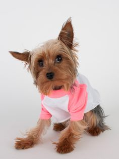 DOGS ARE PEOPLE TOO - Two-Tone Raglan Dog's T-shirt in Four Colors | TRAITS