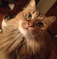 My name is Spazzy, I belong to Terry Mullins. I am 21 years old this year!  I love nilla wafers. They are my favorite. I also love to give massages but some people sayI can be pretty grumpy and bossy.