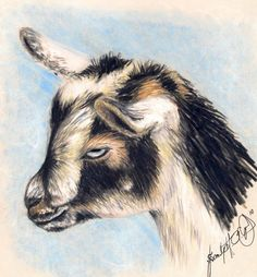 Zoey The Goat Drawing by Scarlett Royal - Zoey The Goat Fine Art Prints and Posters for Sale