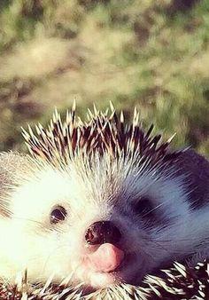 A l'occasion d'un selfie, ce petit fripon n'hésite pas à nous tirer la langue.