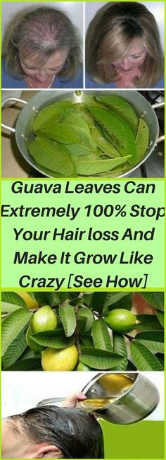 What you need to do if you're faced with this issue is forget about the commercial hair care products and turn to nature. It has the cure for nearly all diseases and medical conditions and can help you with hair loss as well. The best natural remedies fo Anti Hair Loss, Stop Hair Loss, New Hair Growth, Healthy Hair Growth, Autogenic Training, Guava Leaves, Healthy Fiber, Hair Loss Remedies, Hair Loss Treatment