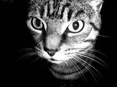 How to Use Clay Kitty Litter to Absorb Odors