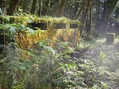 Old WWII Bunker hidden in the woods along the Oregon Coast