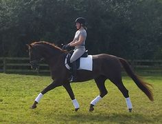 Future Dressage Star for sale in Florida