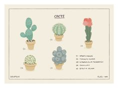 Cacti by Ryan Putnam