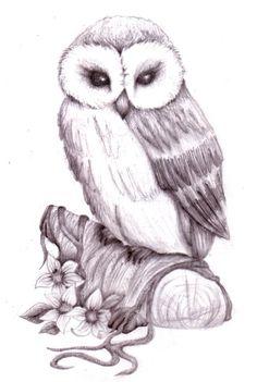 Sketch of Owl