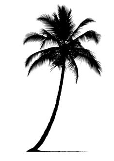 Palm tree silhouette, Palm Tree, Plant Silhouette, Trees PNG and Vector Palm Tattoos, Mini Tattoos, Tattoos For Guys, Tree Silhouette Tattoo, Palm Tree Silhouette, Silhouette Png, Palm Tree Print, Palm Trees, Palm Tree Drawing