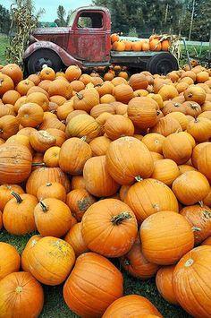 truck load of pumpkins for sale