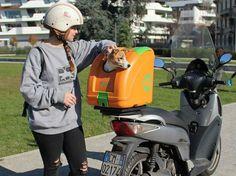5f241beed3a POW - Pet on Wheels a melhor forma de transportar de moto o seu cão